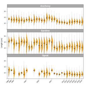 © Ifremer, séries temporelles des distributions des tailles