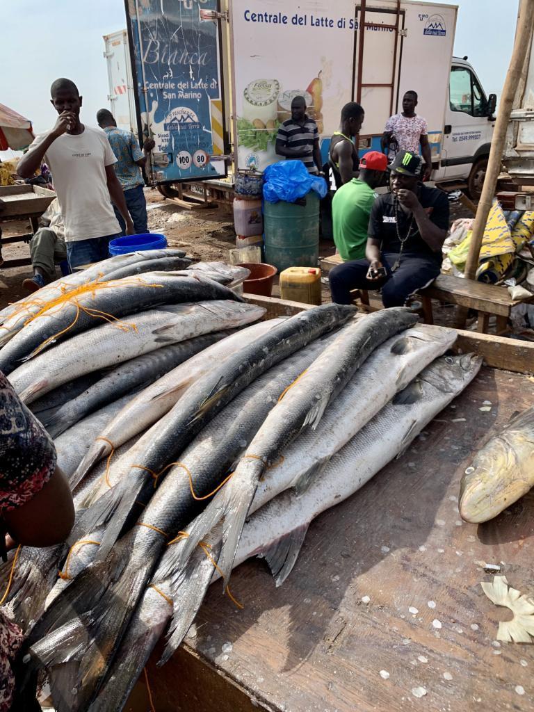 Marché aux poissons à Bissau en Guinée-Bissau, © Durand, Jean-Dominique